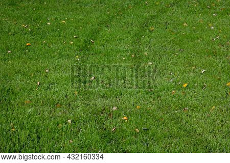 Traces Of Car Wheels On The Green Grass. Outdoor Sunny View Of A Fresh Green Lawn With A Trace From