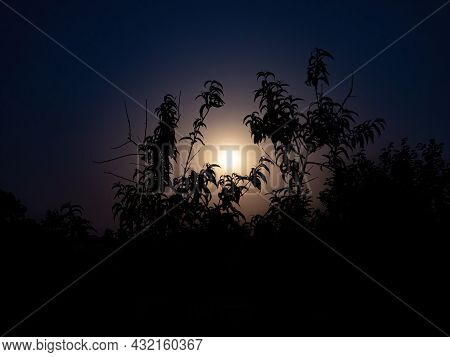 Moonlight In The Night Through The Branches Of Trees. Lunar Glow. Night Darkness. Tree Branches. Nat