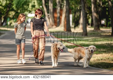 Family walking with golden retriever dogs in the park. Mother, daughter and two doggy pets outdoors at summer