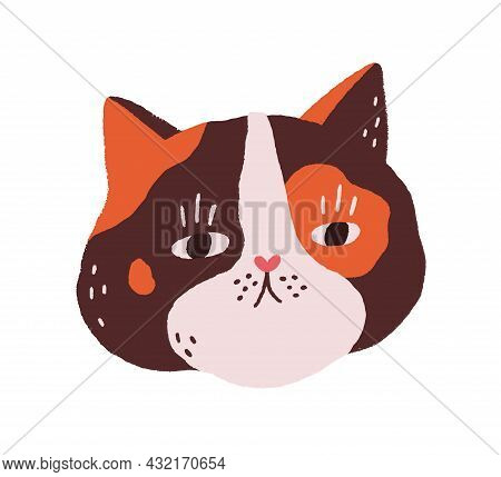 Cute Cats Face. Fluffy Head Of Feline Animal. Funny Kittys Muzzle. Adorable Kittens Snout. Amusing S