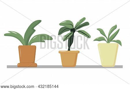 A Collection Of Indoor Plants In Pots Standing On The Window, A Set Of Flowers In A Planter, Home Co