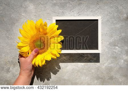 Text Space, Copy-space On Blackboard. Autumn Natural Decorations. Yellow Sunflower In Hand. Flat Lay
