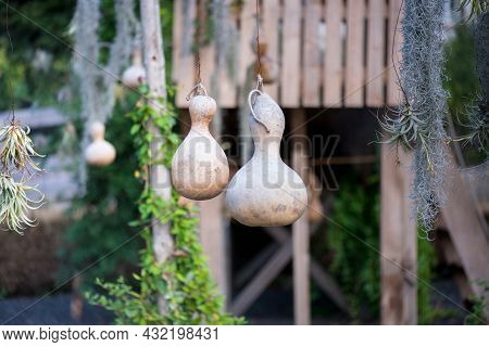 Wine Chinese Gourds. Garden Decoration, Holiday Decoration. Traditional Gourd Flask.