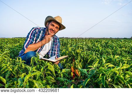 Farmer Is Examining His Pepper Plantation. He Is Worried.