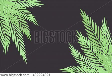 Palm Tree Corner On Dark Background, Copyspace For Tropical Themed Decor. Green Tropical Leaves, Jun