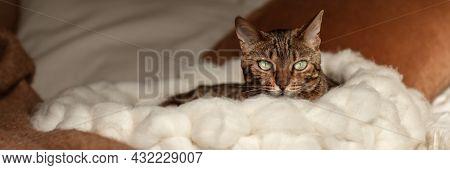 Bengal Cat Resting In Merino Wool Round Pet Lounge In Creamy And Terracotta Rust Tones