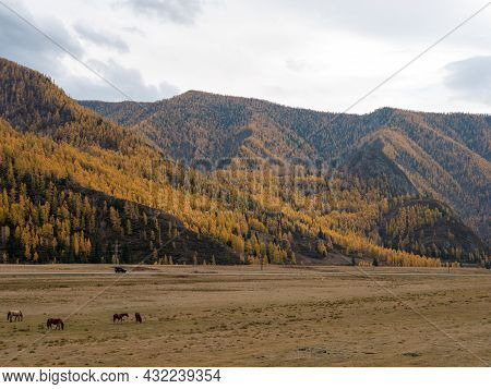 Autumn View Of The Altai Mountains And Grazing Horses. Chuysky Tract, Altai Republic, Russia.