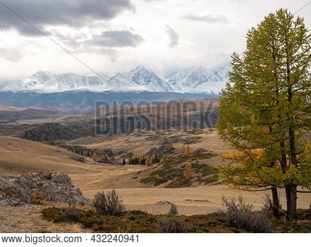 Green Tree Against The Background Of The Altai Mountains With Snow-capped Peaks. Severo-chuysky Ridg
