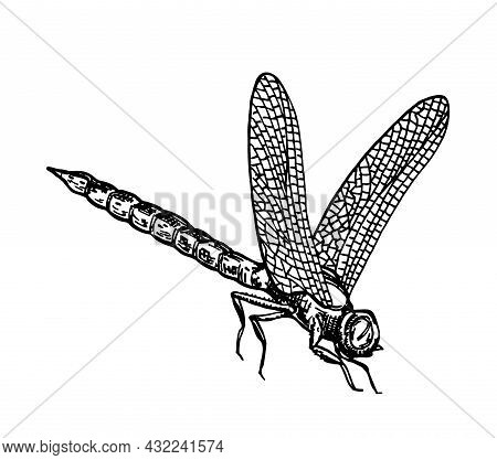 Black And White Dragonfly With Delicate Wings Sketch Vector Illustration. Vector Ink Drawing Dragonf