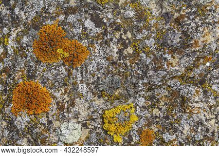 Full Frame Abstract Background Showing Various Lichen Species
