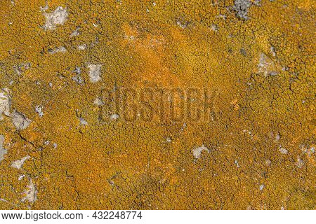 Picture Of A Full Frame Abstract Lichen Background