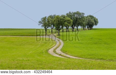 Rural Scenery With Grove, Meadows And Farm Track At Summer Time