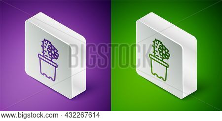 Isometric Line Cactus Peyote In Pot Icon Isolated On Purple And Green Background. Plant Growing In A