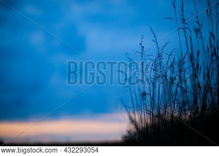 Natural Strong Blurry Background Of Green Grass Blades Close Up. Fresh Grass Meadow In The Evening A