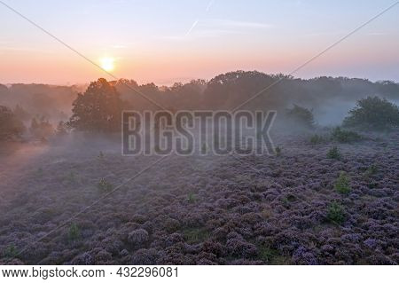 Aerial from blossoming moorlands at the Holterberg in the Netherlands at sunrise with fog