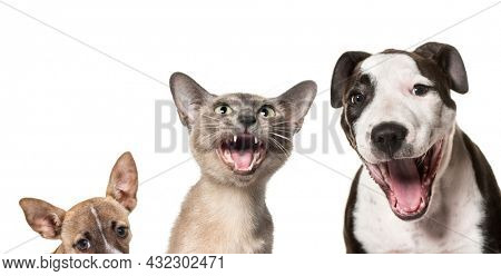 Cats and dogs laughing together against white background