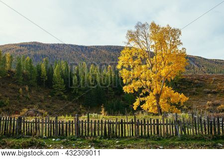 Colorful Autumn Landscape With Birch Tree With Yellow Leaves In Sunshine On Background Of Hills And
