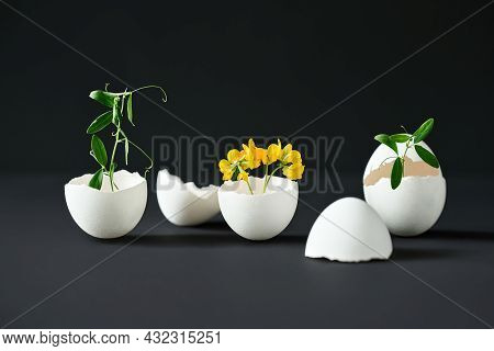 Flowers In Eggshell On Black Background. Creative Art, Symbolism Concept.