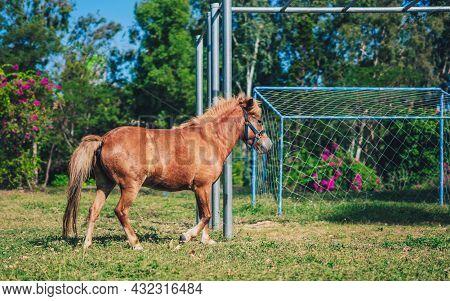 L Side Photo Light Brown Horse Pony Play Run Vigorously Briskly On Football Field Grass. Summer Tree