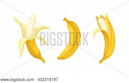 Banana As Elongated, Edible Fruit Covered With Yellow Rind Vector Set