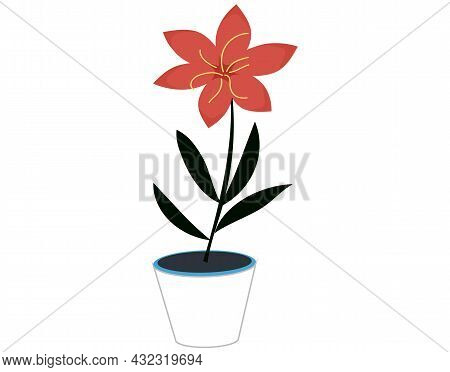 Decorative Potted Plant. Houseplant With Red Flower, Black Leaves In White Ceramic Pot. Floral Decor