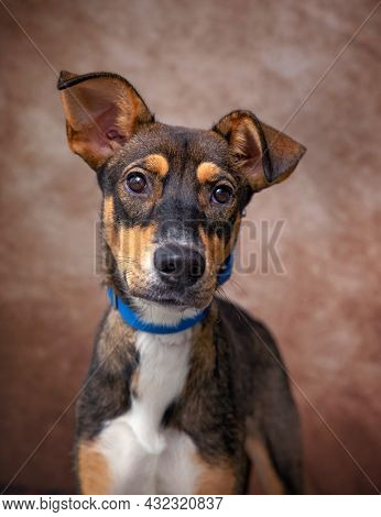 studio shot of a cute dog on an isolated background