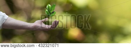 Hand With Germinating Plant Seeding Growing. Business Development Growth, Planing And Strategy Conce