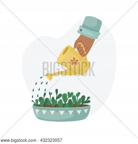 Watering A Home Plant In A Pot From A Watering Can. Planting Plants. Decorative Plants In The Interi
