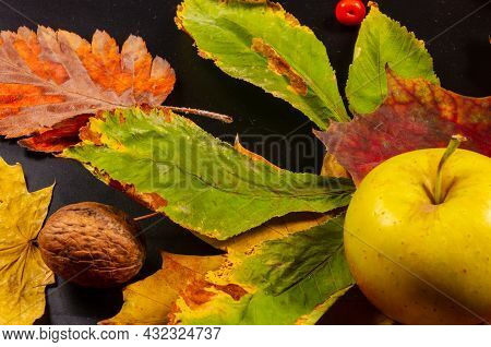 Autumn Art Composition - Varied Dried Leaves, Pumpkins, Fruits, Rowan Berries On Black Background. A
