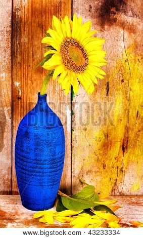 Sunflower on a blue vase with leaves and petals on the floor and  a grunge rustic wood planks  background
