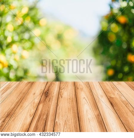 Empty Wood Table With Free Space Over Orange Trees, Orange Field Background. For Product Display Mon