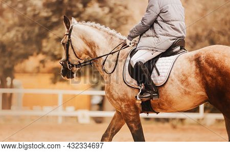 A Rider In A Gray Jacket Is Sitting On A Beautiful Dappled Horse With A Braided Mane On An Autumn Da