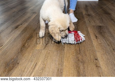 A Woman Wiping Piss On A Puppy Off Modern Water Resistant Vinyl Panels With A Mop, Next To A Disturb