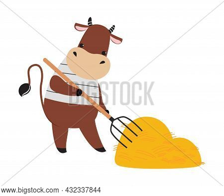 Cute Cow As Farm Animal On Ranch Gathering Hay With Pitchfork Vector Illustration