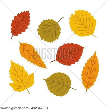 Autumn Leaves Set - Alder, Aspen, Elm, Linden And Other. Fall Foliage In Yellow, Red, Orange, Green