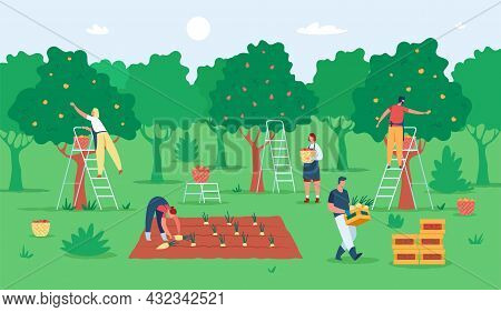 People Harvesting Fruits, Farmers Gathering Apples In Garden. Agricultural Workers Picking Fruit Fro