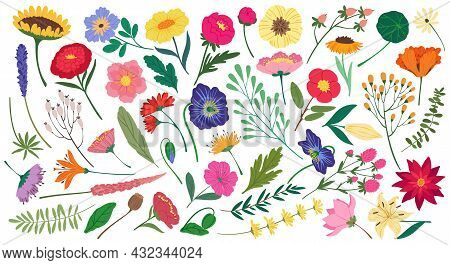 Cute Spring Flowers And Leaves, Botanical Floral Elements. Flat Cartoon Blossom Flower, Wildflower A