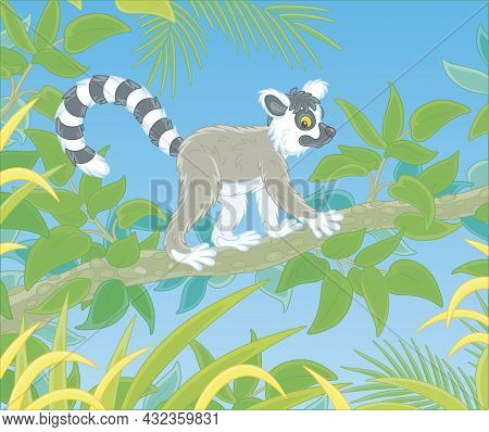Exotic Tropical Madagascar Ring-tailed Lemur Walking In Thickets Of A Rainforest, Vector Cartoon Ill