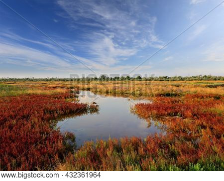 Landscape with pond among salicornia meadow on seashore