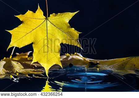 Yellow Autumn Maple Leaf With Reflection And Drop Over Wavy Water.