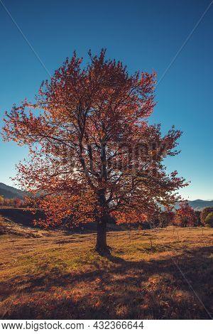 Autumn Tree And Mountain Fields, Fall Season
