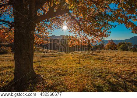 Autumn Tree And Mountain Meadow. Fall Season Outdoors.
