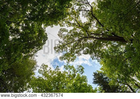 Wide-angle Low Canopy Shot In Green Forest, Upwards View To The Treetops With Green Foliage And Blue