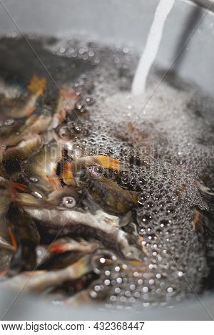 The Process Of Extracting Excess Salt From Fish By Soaking In Water For Further Drying. Cooking Drie