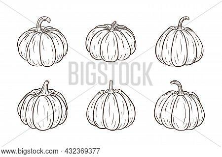 Pumpkin Illustrations Set. Fresh Ripe Pumpkins Collection For Stickers, Prints, Invitation, Menu And