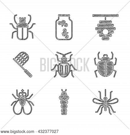 Set Chafer Beetle, Larva Insect, Mosquito, Mite, Insect Fly, Butterfly Net, Hive For Bees And Stink
