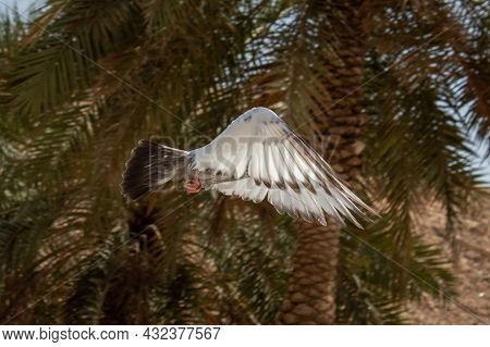 A Bird Flapping Its Wings, Its Head Got Covered With The Wings