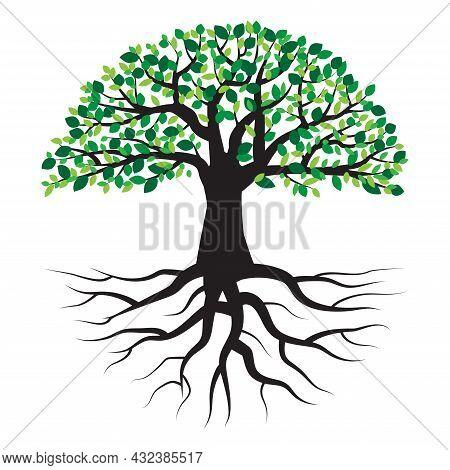 Summer Tree With Root. Green Leaf. Design Spring Tree Illustration. Nature Background. Vector Illust