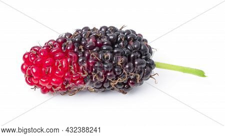 Isolated Mulberry. Top View Organic Mulberry Fruits On White Background. With Clipping Path.
