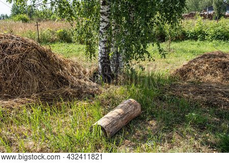 Three White Birch Trunks, Two Piles Of Hay And A Log In The Foreground.